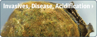 Invasives, Disease and Acidification