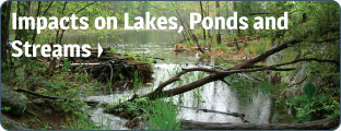 Impacts on Lakes, Ponds and Streams